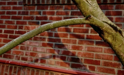 tree branch against brick wall