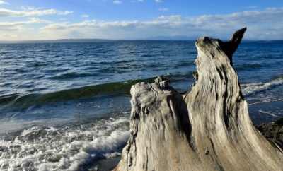 driftwood in front of Puget Sound