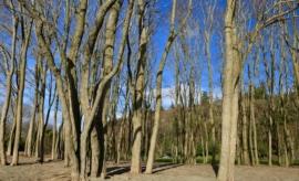 leafless trees in Golden Gardens