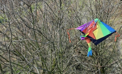 colorful kite stuck in tree